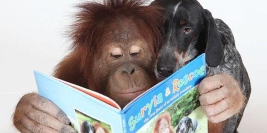 Список самых умных животных
