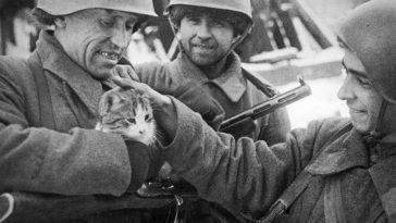 Тест по истории. 16+ Великая Отечественная Война