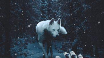 «Не могу перестать чувствовать»: захватывающие сказочные фото-манипуляции Джеффа Кеплера