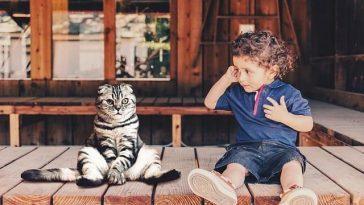 5 причин, почему родители должны купить ребёнку кошку, а не собаку