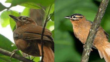 Виды животных, вымерших в 2018 году.