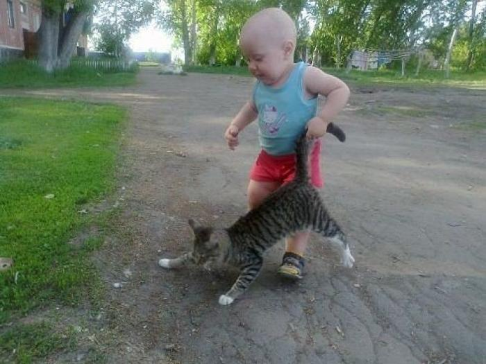 Почему кошка или кот агрессивны? Советы о том, как бороться с агрессией у кошек
