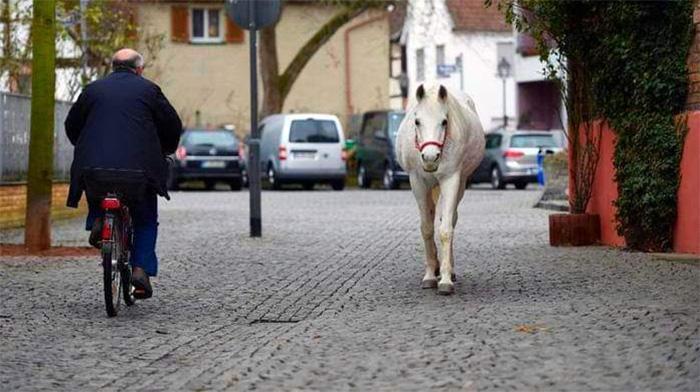 Каждое утро эта лошадь прогуливается по городу совсем одна, чтобы поприветствовать своих друзей-людей