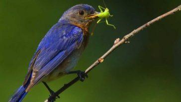 Как насекомые прячутся от птиц?