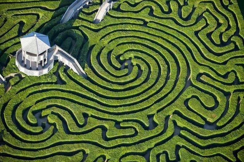 Лабиринт Лонглит Хэдж в Велиобритании. Самым большой в мире лабиринт из живых изгородей.