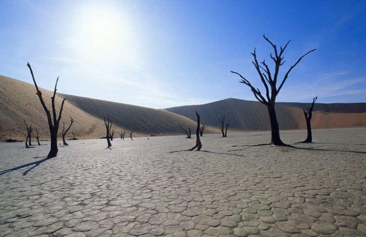 Дедвлей: мёртвое болото в Намибии