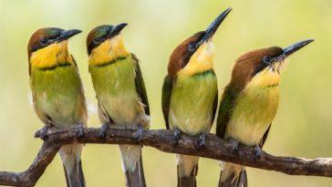 Как происходила эволюция птиц