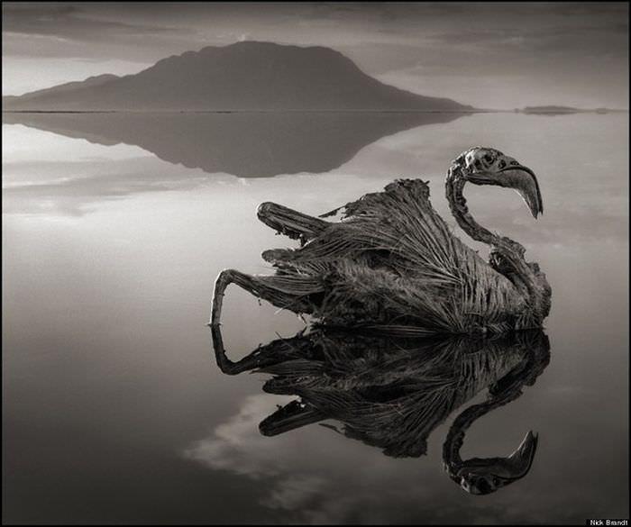 Озеро Натрон в Танзании: озеро которое приносит смерть