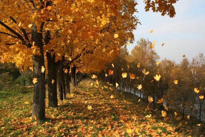 Почему опадают листья?