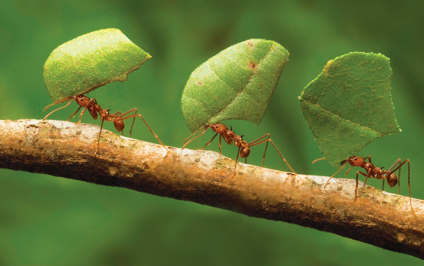 Биография муравьев и их связь с осами