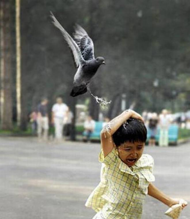 Писают ли птицы?