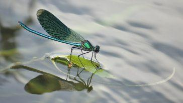 Почему в море так мало насекомых?