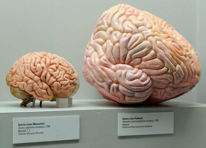 Почему животные с большим мозгом не умнее нас?