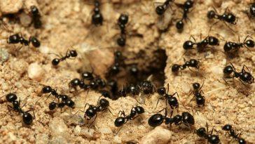 Cпят ли муравьи?