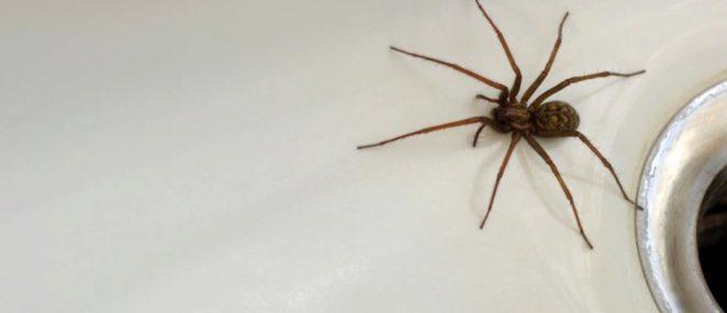 Почему пауки иногда остаются неподвижными в течение длительного времени?