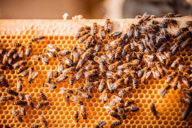 Я помогаю или сокращаю популяцию пчел, питаясь медом?