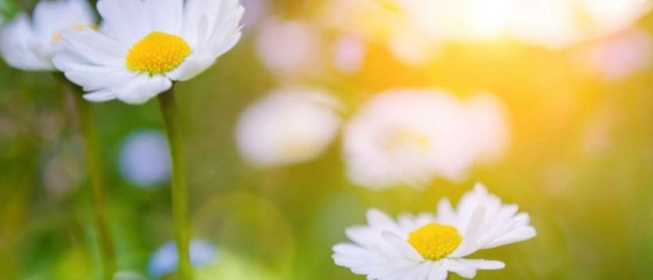 Может ли быть рак у растений?