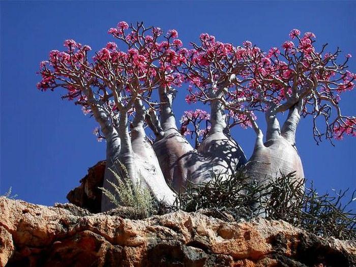 Остров Сокотра, Йемен - «самое странное место на Земле»