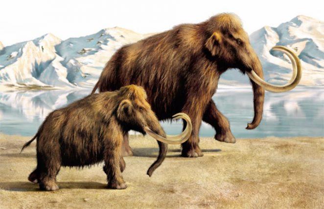Что и как ел Шерстистый мамонт