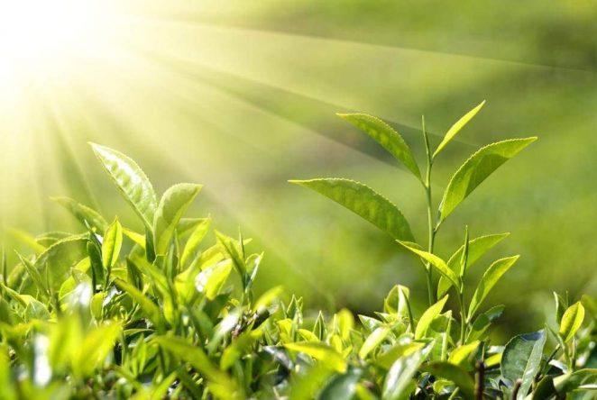 Искусственный фотосинтез как перспективная технология для производства энергии