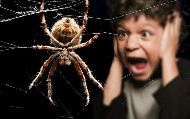 Арахнофобия, или история боязни пауков