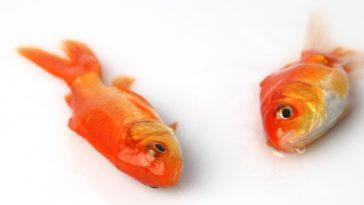 Почему рыба всплывает после смерти?