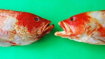 Есть ли у рыб язык?