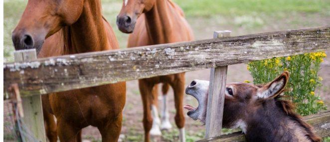 Зачем лошадям нужны подковы и почему ослам нет?