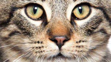 Почему у кошек и змей узкие зрачки