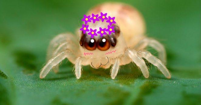 Как перестать бояться пауков?