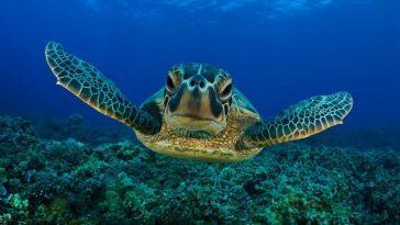 Как черепахи выживают под водой?