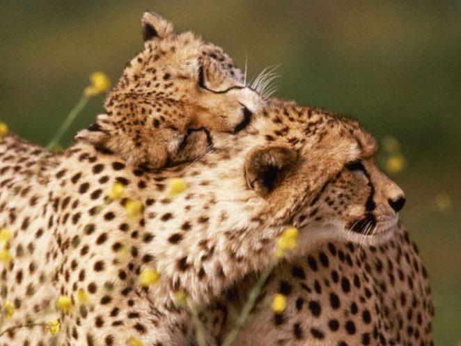 Как животные распознают себе подобных