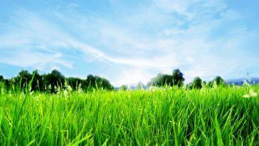 Чем пахнет скошенная трава?