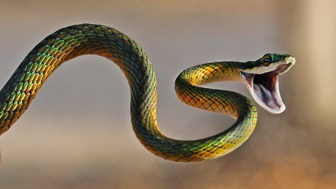 Из чего состоит яд змей?