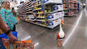 Гусь сходил за покупками в Walmart
