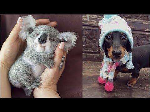 Подборка милых животных