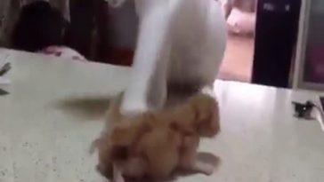 Кот решил поиграть с котятами