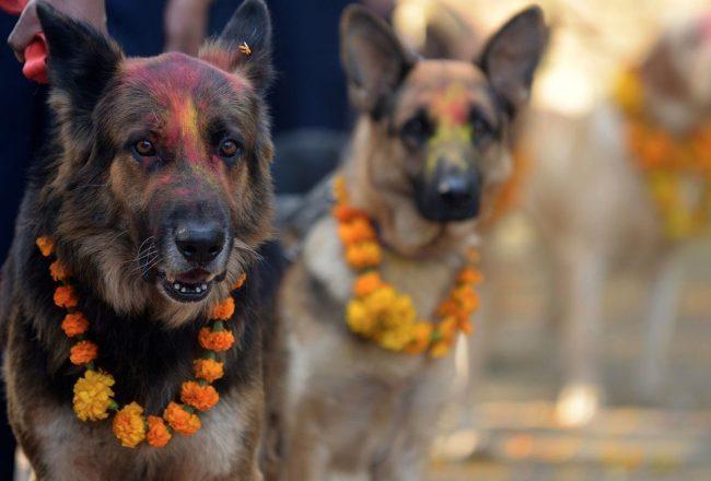 Кукур Тихар. Фестиваль собак в Непале