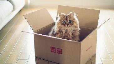 Почему кошки любят коробки? Ученые выяснили причины и нашли ответ