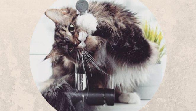 Почему кошка пьет из-под крана или унитаза?