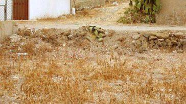 На фото спрятан кот. 90% людей не могут найти его менее чем за 30 секунд.