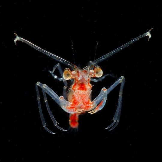 Как выглядит планктон. Фото от Рио Минемизу