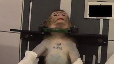 Сегодня вакцина от коронавируса тестируется на животных