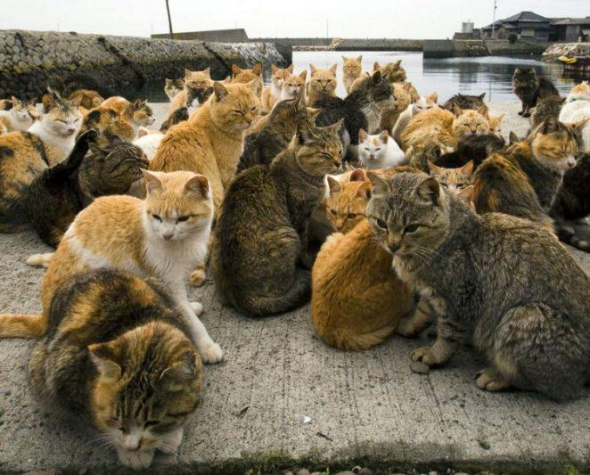 Аосима и Тасиро - острова кошек в Японии