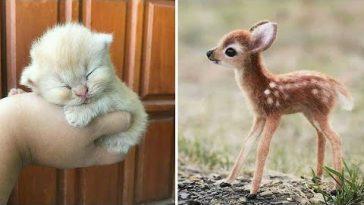 Забавные и милые животные