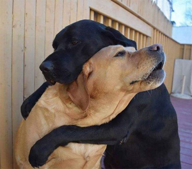 Иногда нужно просто обнять