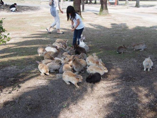 Окуносима - кроличий остров  в Японии