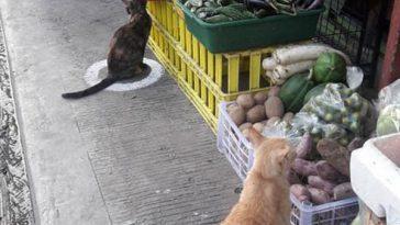 Кошки соблюдают социальное дистанцирование. А вы?