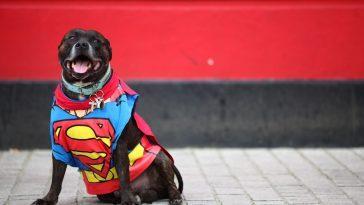 Будни пса-супергероя (видео)
