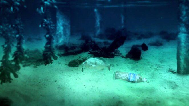 «Бутылочная одиссея» Куда попадают выброшенные нами пластиковые бутылки?